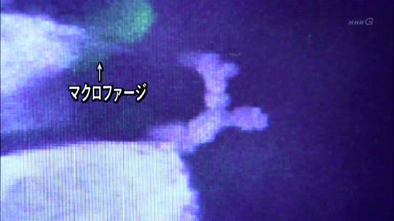 Pdvd_084