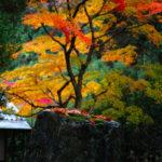 京都紅葉の旅・まとめ(3)