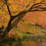 京都紅葉の旅・まとめ(2)