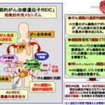 岡山大、肝転移の膵臓がんで治験