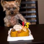 愛犬の誕生祝い
