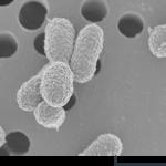 がん治療で無視できない腸内細菌