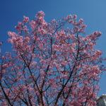 春だから、そろそろ写真も撮りに行きたい