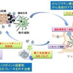 膵臓がんの樹状細胞療法 治験